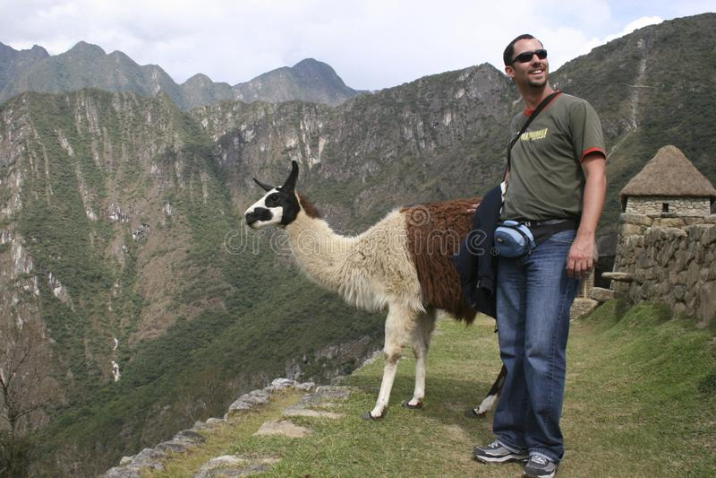 Een toerist ontmoet een inwoner van de guanacolama guanicoe camelid aan Zuid-Amerika, Machu Picchu Peru royalty-vrije stock foto's