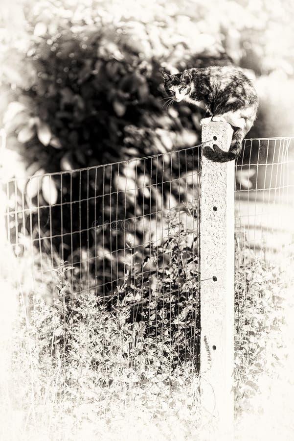Een tortoise-shell vrouwelijke kat die camera bekijken streek tussen tw neer royalty-vrije stock foto's
