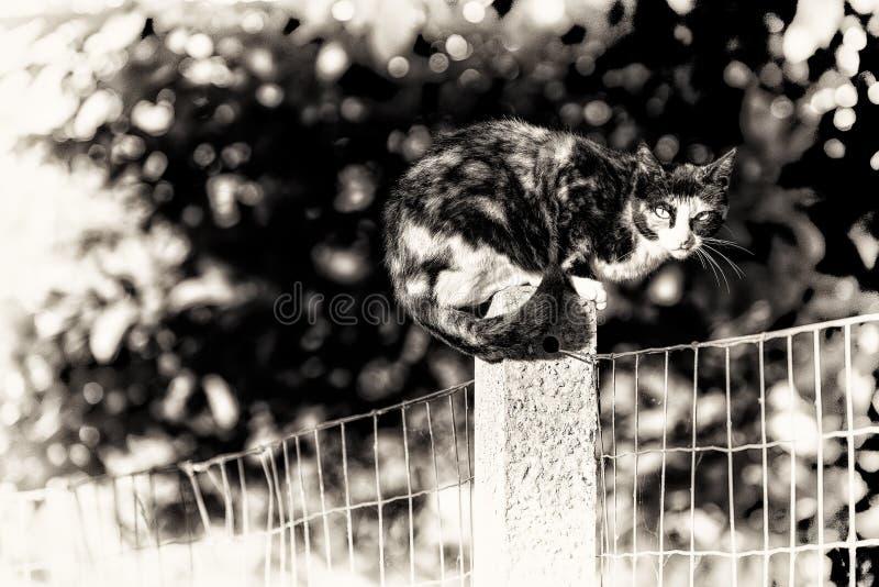 Een tortoise-shell vrouwelijke kat die camera bekijken streek tussen tw neer royalty-vrije stock fotografie
