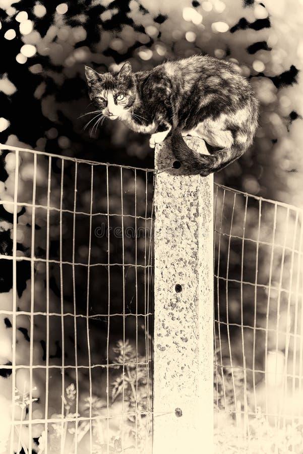 Een tortoise-shell vrouwelijke kat die camera bekijken streek tussen tw neer stock fotografie
