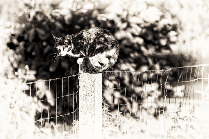 Een tortoise-shell vrouwelijke kat die camera bekijken streek tussen tw neer stock foto