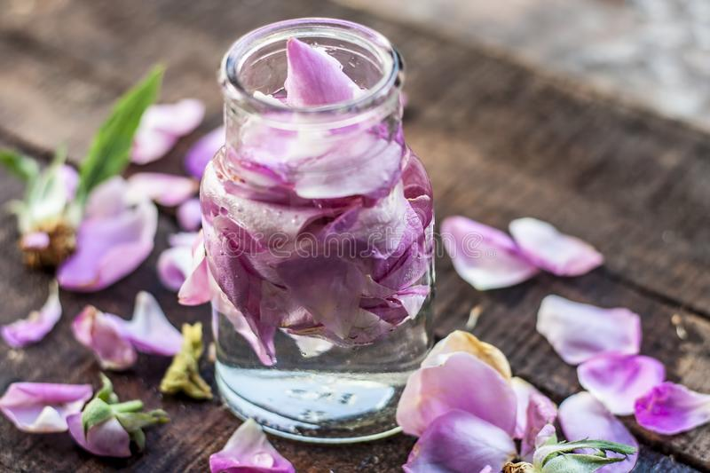 Een transparante fles bevat rozewater met roze bloemblaadjes daarin royalty-vrije stock afbeelding