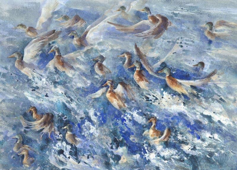 Een troep van eenden in het overzees bespat waterverf vector illustratie