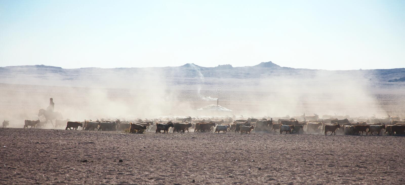Een troep van schapen op de steppen stock fotografie