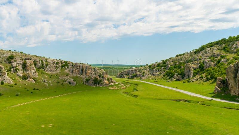 Een troep van sheeps die over groen gras weiden royalty-vrije stock afbeelding