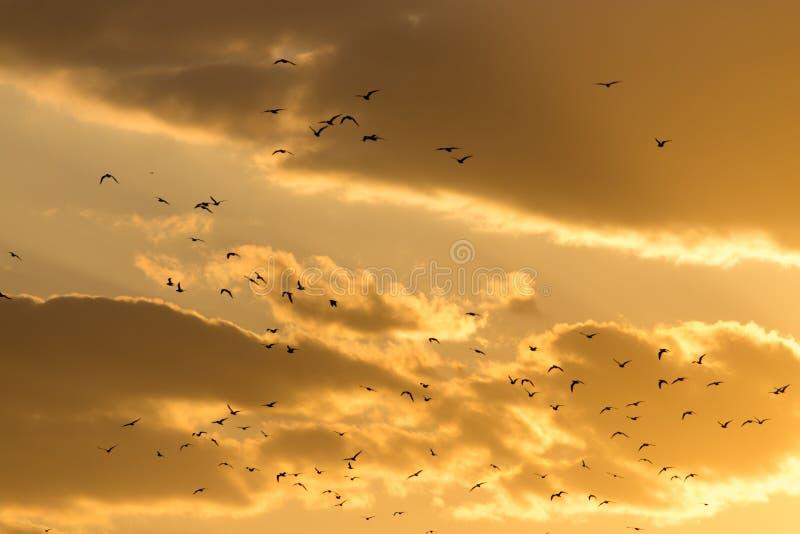 Een troep van vogels bij zonsondergang stock foto