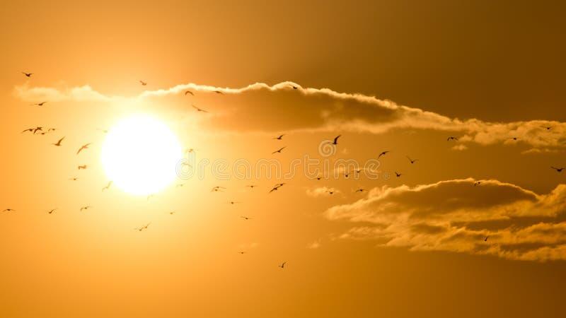 Een troep van vogels bij zonsondergang stock foto's
