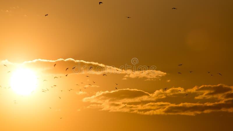 Een troep van vogels bij zonsondergang stock afbeeldingen
