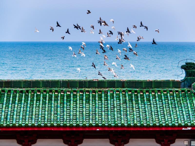 Een troep van vogels tijdens de vlucht boven het dak van een Chinese tempel stock foto's