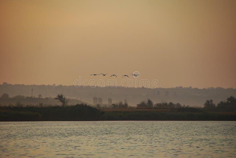 Een troep van vogels vliegt over de rivier bij zonsondergang stock afbeeldingen
