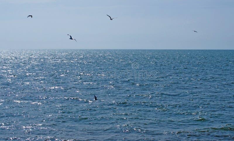 Een troep van zeemeeuwen die over een kalme diepe blauwe zonovergoten overzees met heldere blauwe de zomerhemel vliegen stock foto's