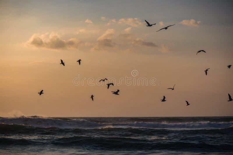 Een troep van zeemeeuwen het vliegen stock afbeelding