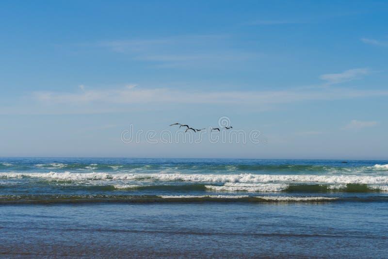 Een troep van zeemeeuwen vliegt over de Vreedzame Oceaan in Kanonstrand, Oregon, de V.S. royalty-vrije stock fotografie