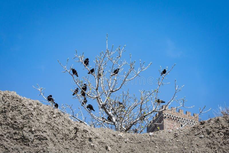 Een troep van zwarte vogels die in een boom zitten royalty-vrije stock foto's