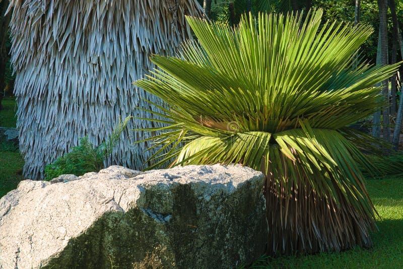 Een tropische gemodelleerde tuin, met lokale palminstallaties, en gras, dichtbij een groot graniet bolder royalty-vrije stock fotografie