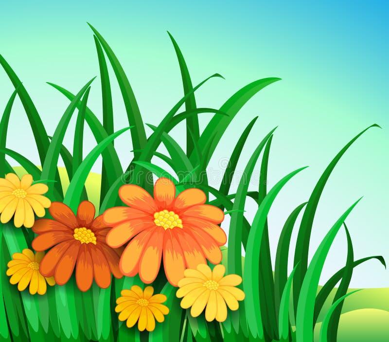 Een tuin in de heuvel met verse oranje en gele bloemen royalty-vrije illustratie
