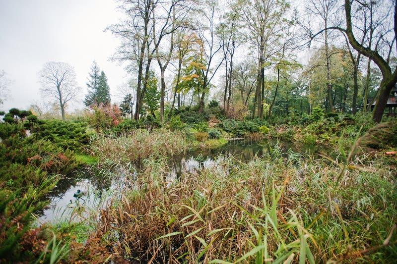 Een tuin kleine vijver met struiken en weelderige for Kleine vijver tuin