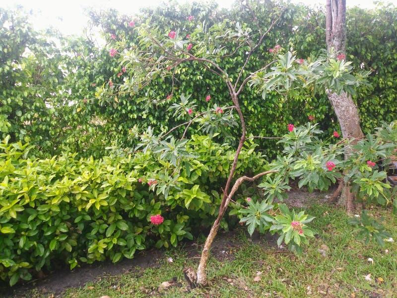 Een tuin in Miami, Florida Verenigde Staten stock foto