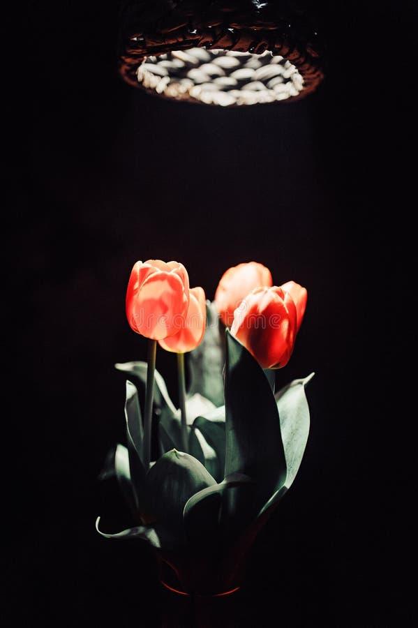 Een tulp in rook stock foto's