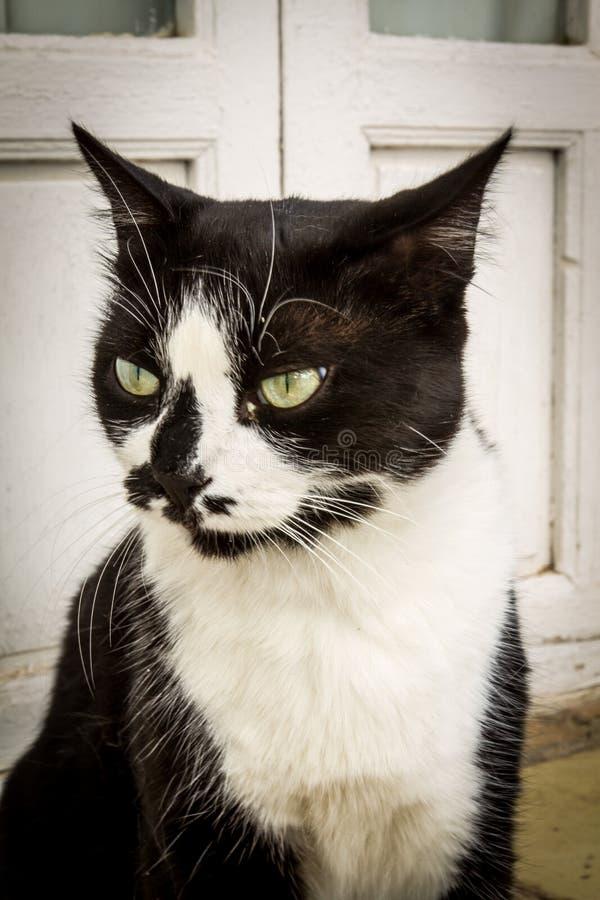 Een tweekleurige kat op de straat - beeld - foto royalty-vrije stock fotografie