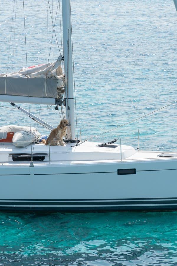 Een varend jacht lopend op tropische overzees Een hond zit op het dek stock foto's