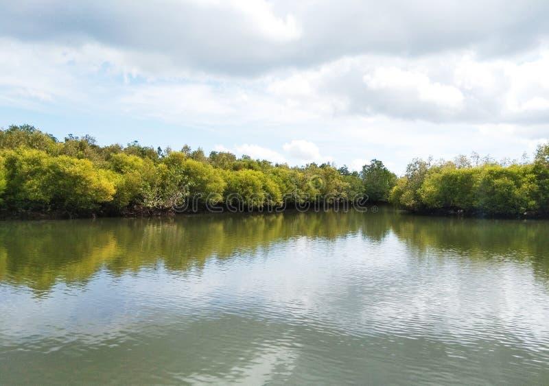 Een veilige plaats van mangroven waar u het gebruiken door van kleine boot kunt bezoeken stock fotografie
