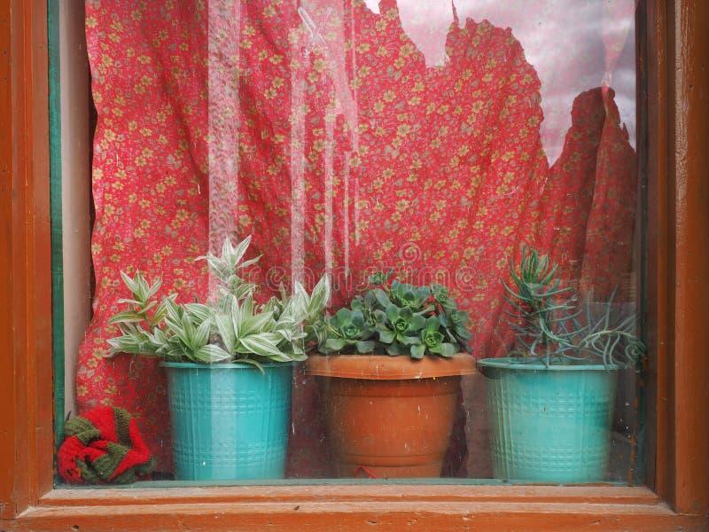 Download Een Venster Met Heldere Rode Gordijnen: Een Bruin Uitstekend Kader, Maar Een Venstervensterbank Drie Houseplants In Kleipotten Stock Foto - Afbeelding bestaande uit gebarsten, mooi: 107703358