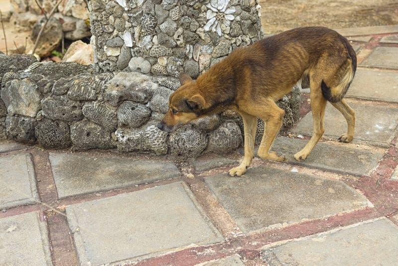 Een verdwaalde hond, de afwezigheid van een gastheer van voedsel en liefdekragen, lif stock afbeelding