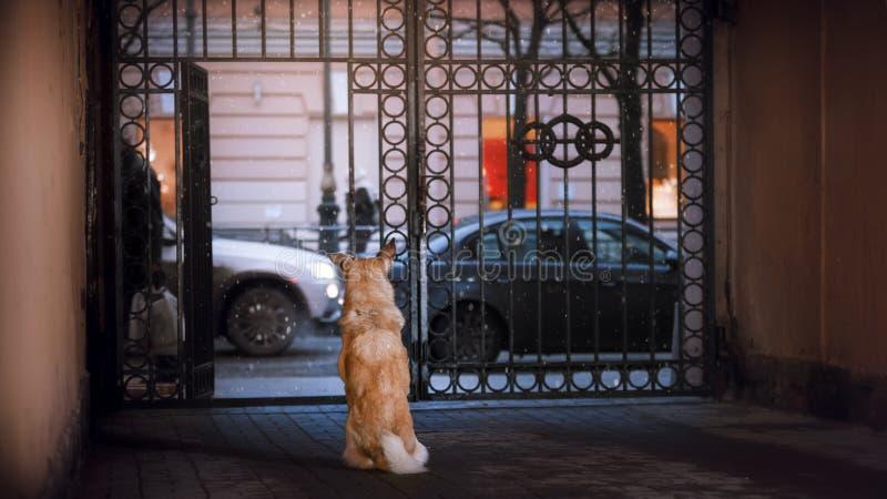 Een verdwaalde hond in de stad Nacht op de straat stock foto
