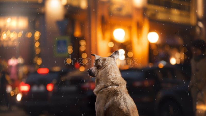 Een verdwaalde hond in de stad Nacht op de straat royalty-vrije stock foto