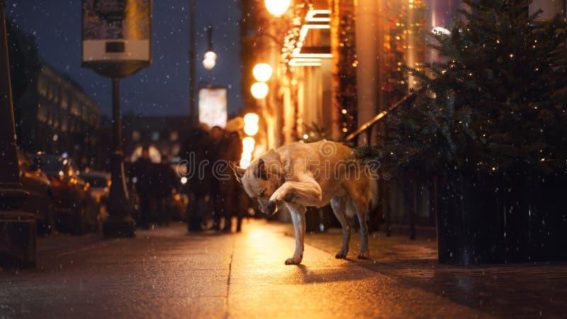 Een verdwaalde hond in de stad Nacht op de straat stock afbeelding