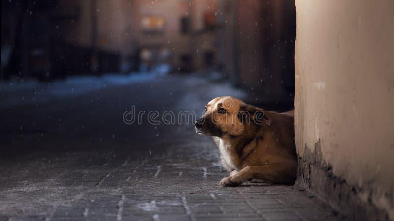 Een verdwaalde hond in de stad Nacht op de straat royalty-vrije stock fotografie