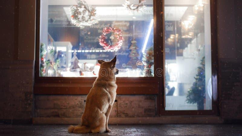 Een verdwaalde hond in de stad Nacht op de straat stock fotografie