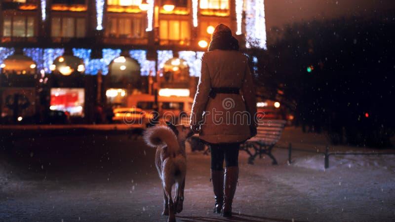 Een verdwaalde hond in de stad Nacht op de straat royalty-vrije stock afbeelding