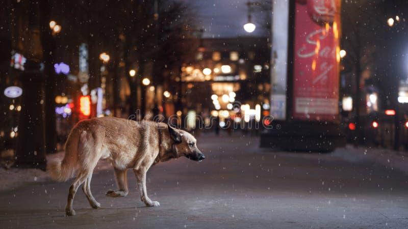 Een verdwaalde hond in de stad Nacht op de straat royalty-vrije stock foto's