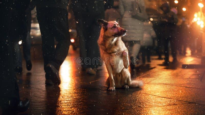Een verdwaalde hond in de stad Nacht op de straat royalty-vrije stock afbeeldingen