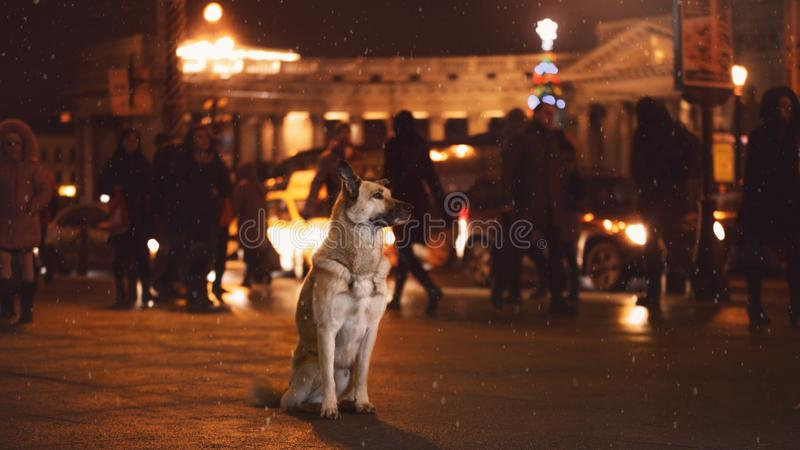 Een verdwaalde hond in de stad Nacht op de straat stock afbeeldingen