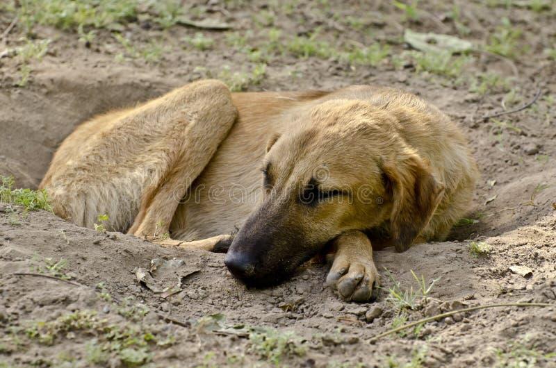 Een verdwaalde hondslaap calmly in een sloot royalty-vrije stock afbeeldingen