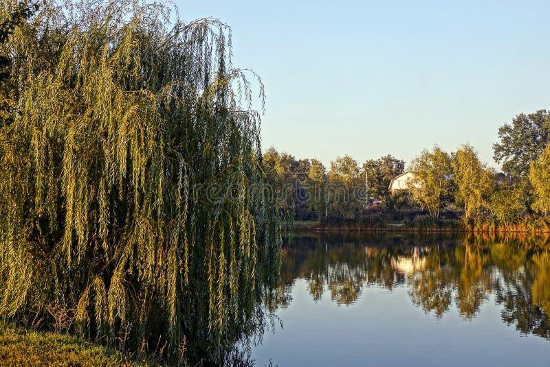 Een vergankelijke boom op de kust van een meer op een zonnige dag royalty-vrije stock afbeelding
