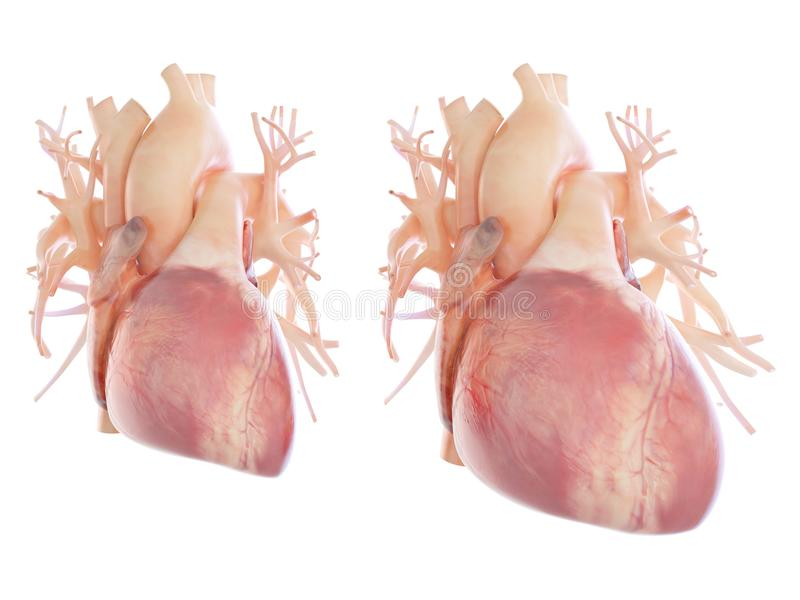 Een vergroot hart royalty-vrije illustratie