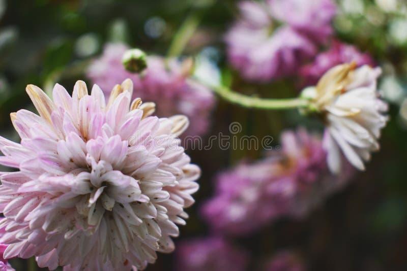 Een verhaal van een bloem stock fotografie