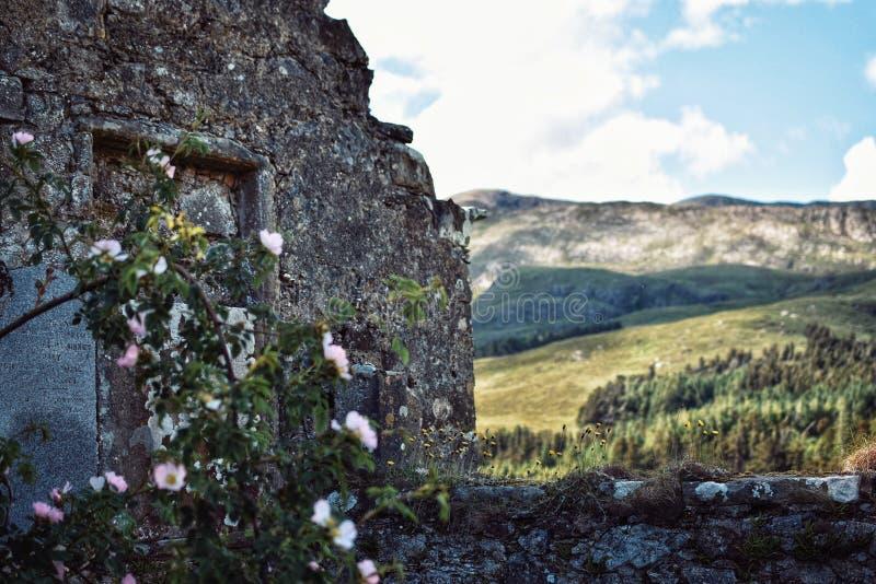 Een verlaten architectuur op een gebied met groen in de voorzijde royalty-vrije stock foto's
