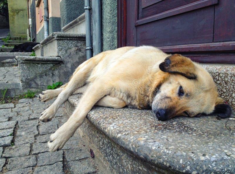 Een vermoeide straathond royalty-vrije stock fotografie