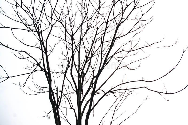Een Vernietigde boom royalty-vrije stock foto