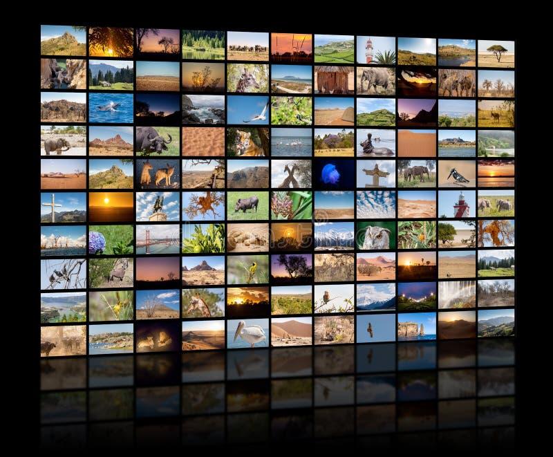 Een verscheidenheid van beelden van Landschappen en Dieren als grote beeldmuur, documentair kanaal stock afbeeldingen