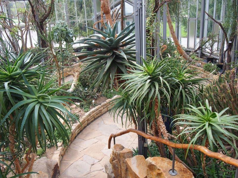 Een verscheidenheid van cactus hoofdzakelijk aloë Vera, botanische tuin Berlijn -Berlijn-dahlem royalty-vrije stock foto