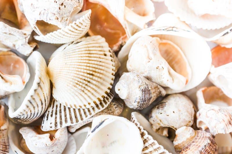 Een verscheidenheid van overzeese shells stock foto's