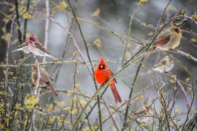Een verscheidenheid van vogels strijken in een roze struik neer stock fotografie