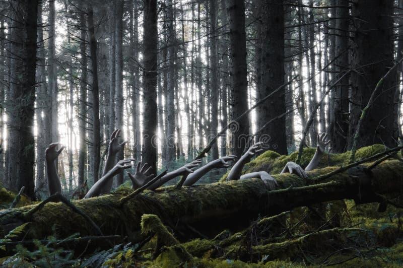 Een verschrikkingsconcept een griezelig de winterbos met zombiehanden die uit een boomboomstam, met een gedempte koude komen geef royalty-vrije stock fotografie