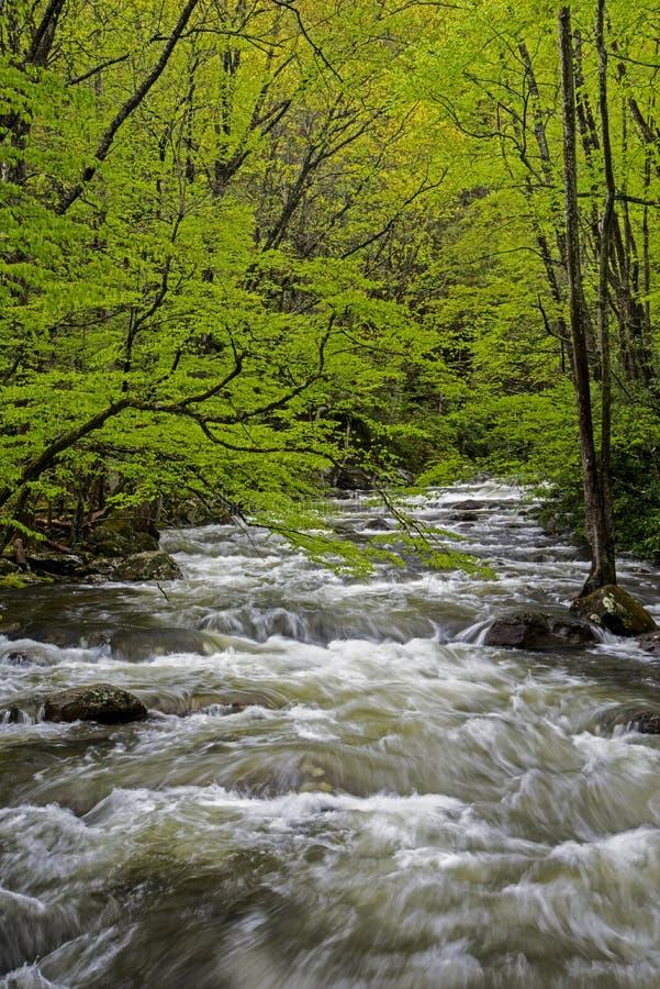 Een verticaal-stroomversnellingstroom is omringd met groen in Smokies royalty-vrije stock foto's